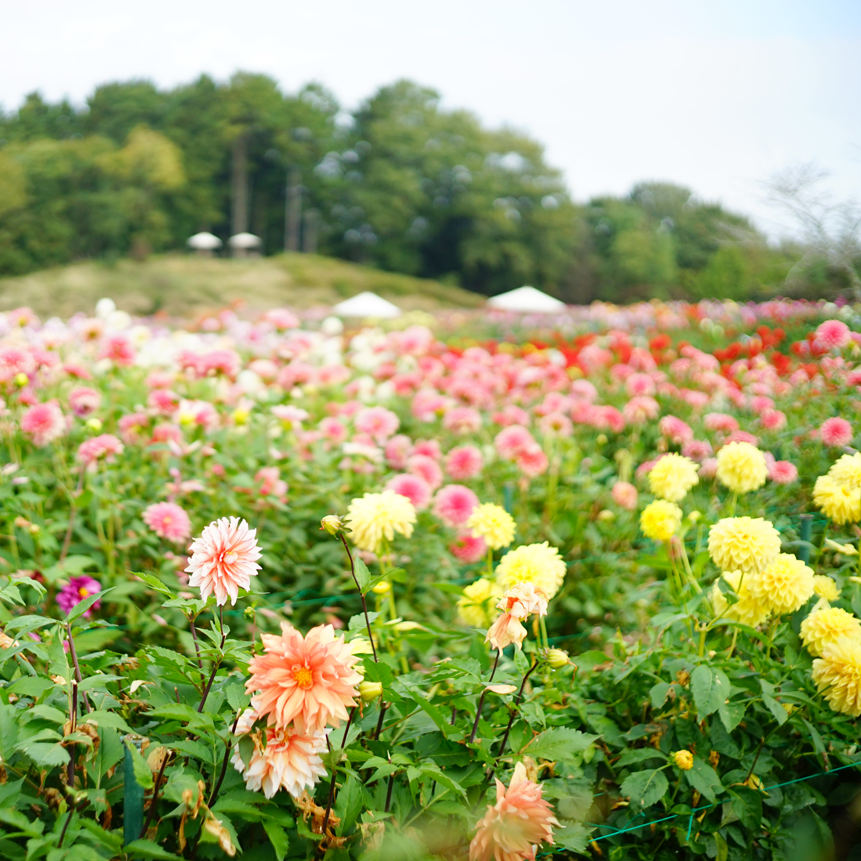base_flowerC