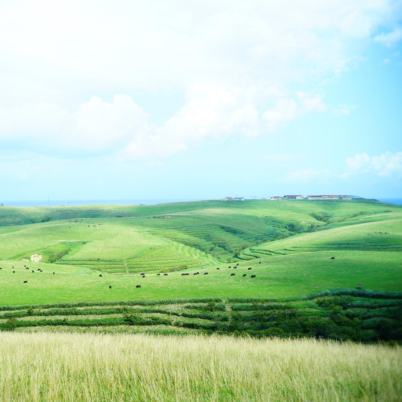 base_grassland01