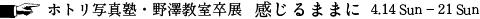 nozawa2019_title